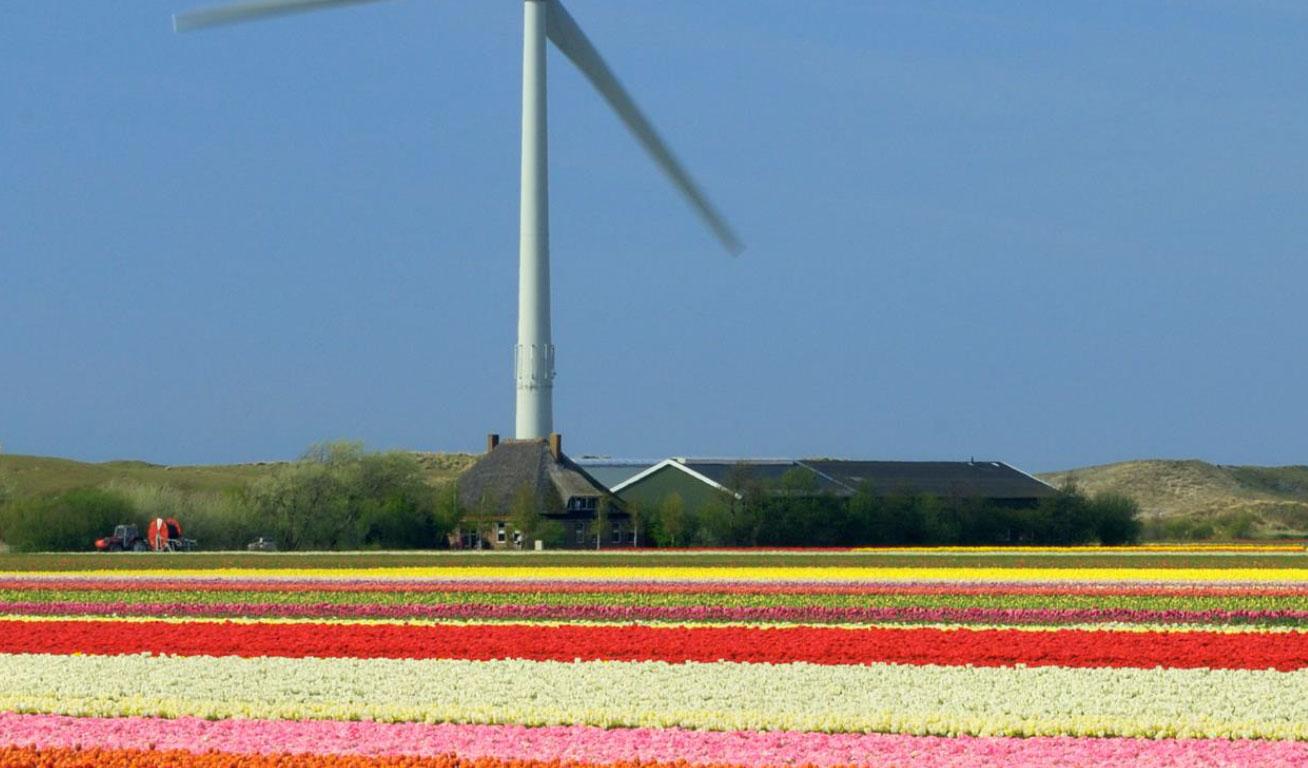 Sap, la sostenibilità racchiusa in 8 obiettivi